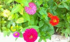 jamie's garden 5