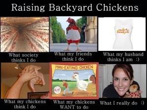 WhatIReallyDo_RaisingBackyardChickens